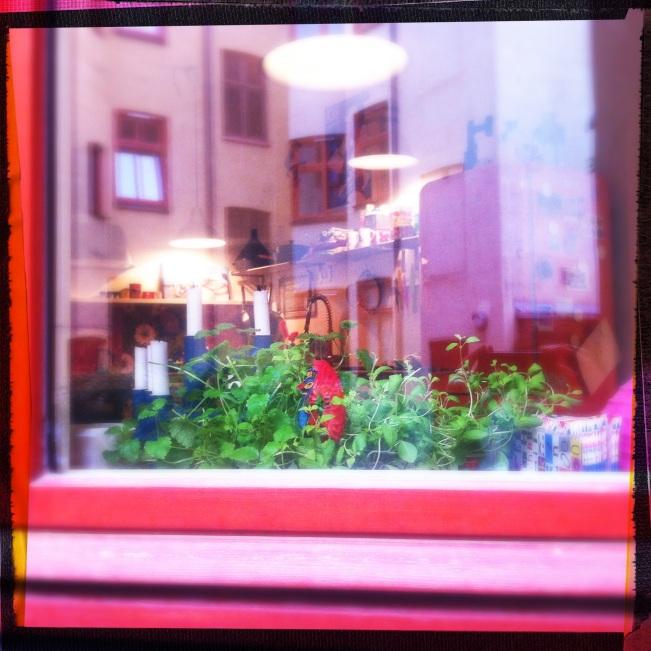 herbs in kitchen window