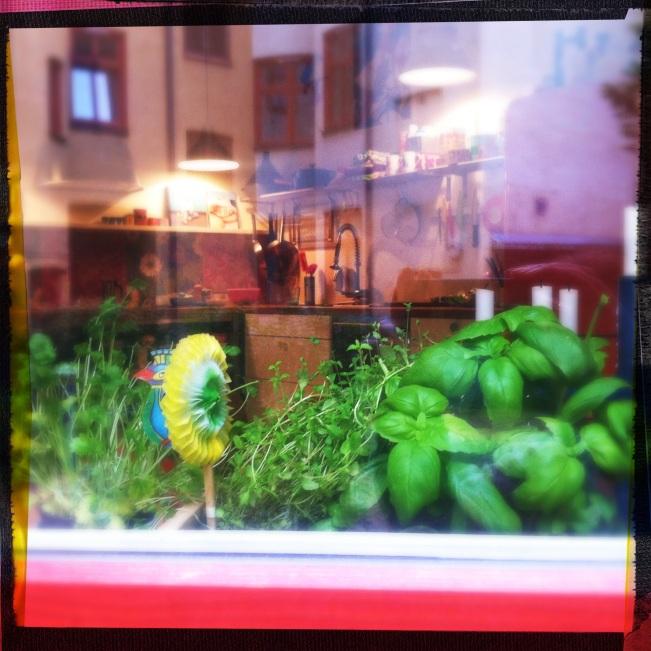 kitchen window with herbs